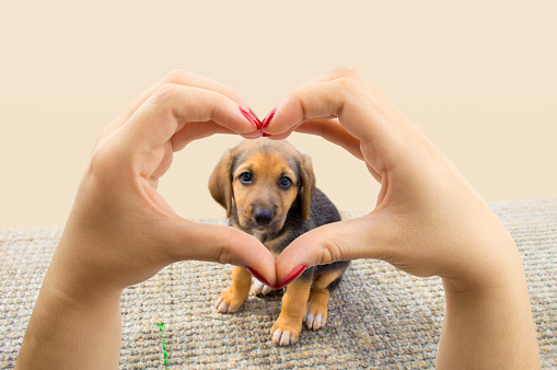 pet adoption center