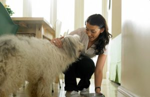 dog rescuers rehoming