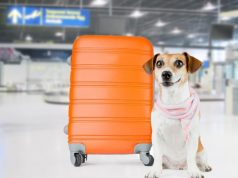 delta pet travel