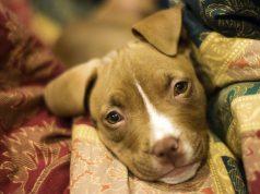 Stop Pet Abuse
