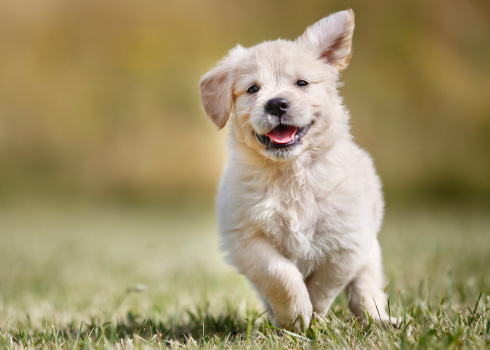 pictures of baby puppies