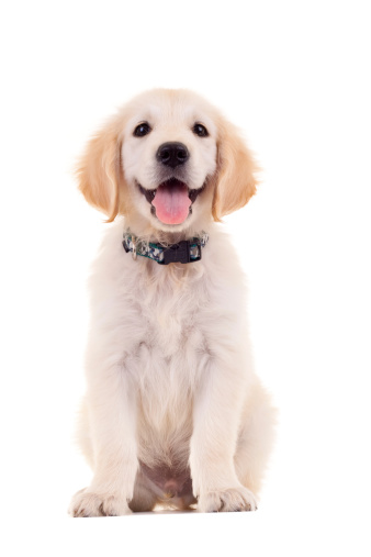 puppy photography