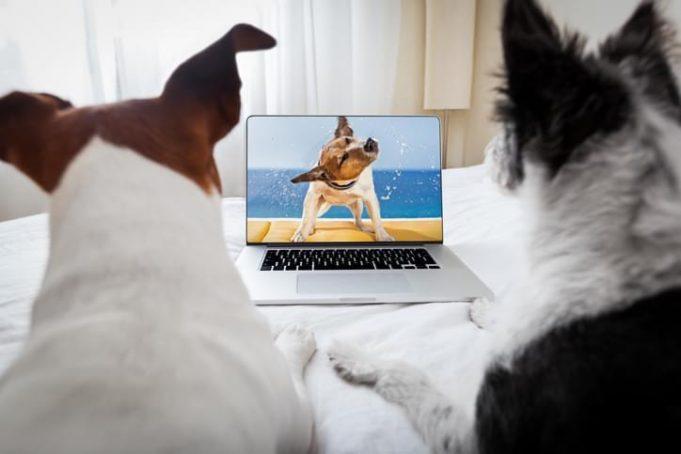 dog watching tv like human