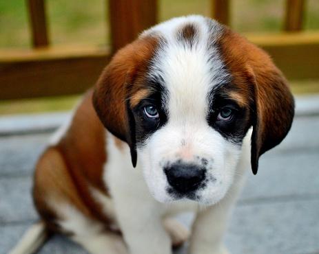 baby dog photos