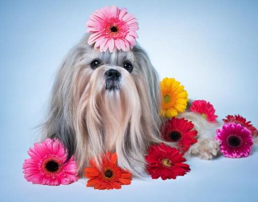 best dog perfume spray
