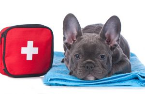 dog first aid kit checklist
