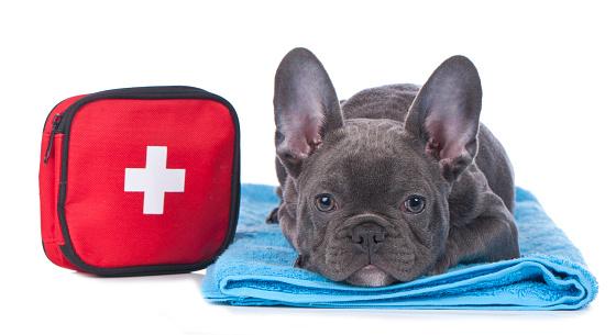dog first aid kit checklist