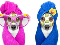 holistic health care for dogs