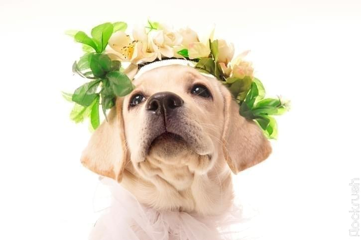 dog friendly wedding venues
