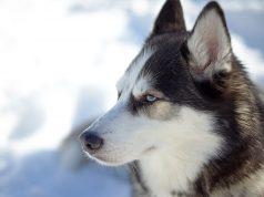 perfect dog