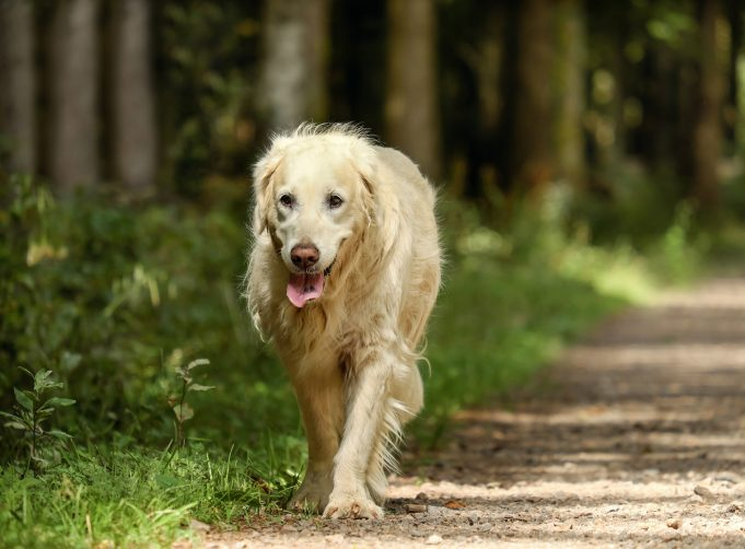 Do THIS With Your Senior Dog To Make Her Feel Young