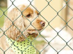 organizations against animal cruelty
