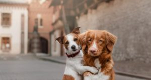 most adorable puppies