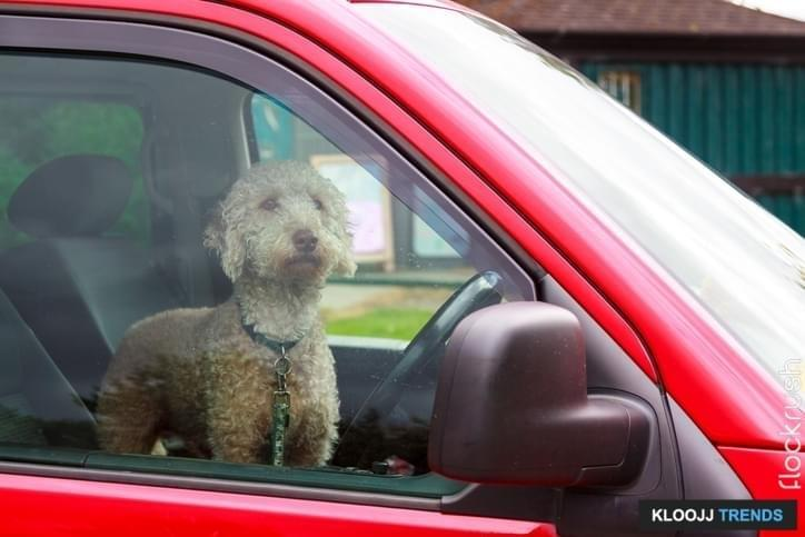 dog locked in car who to call