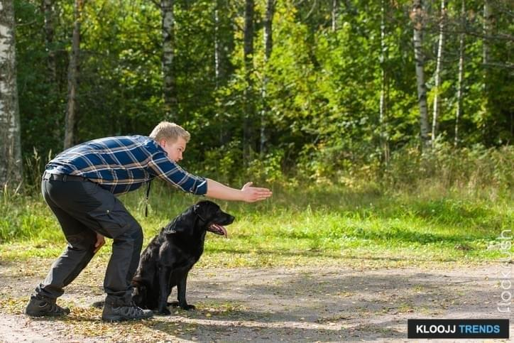 professional dog training schools