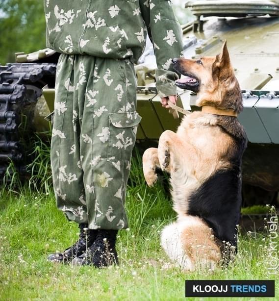 official service dog registration