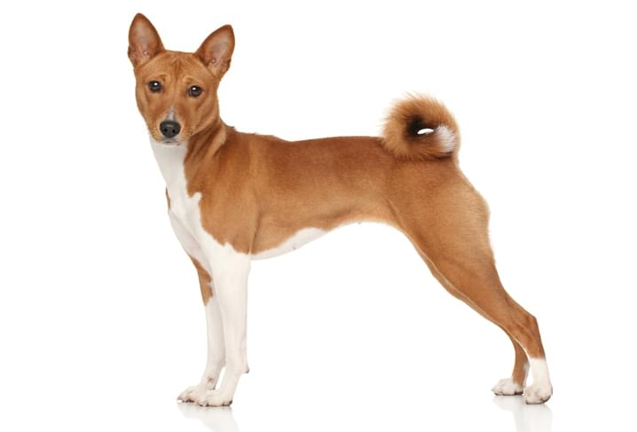 protective dog breeds