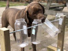 Stimulate Your Dog's Mind