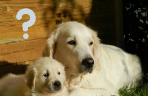 FAQ Dog Questions