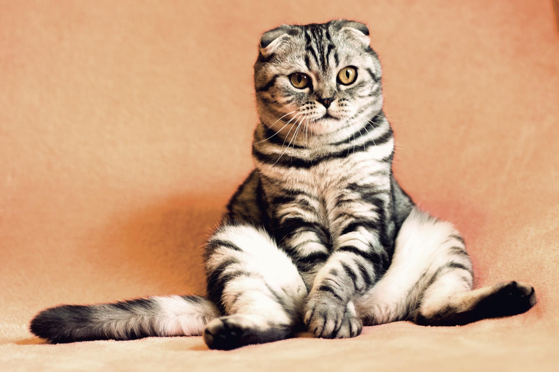 Cat's Confidence