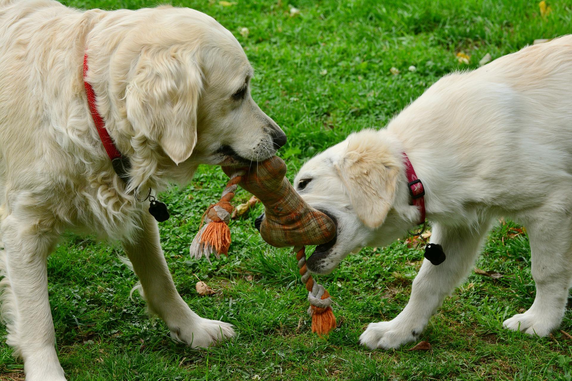 Puppy Bite