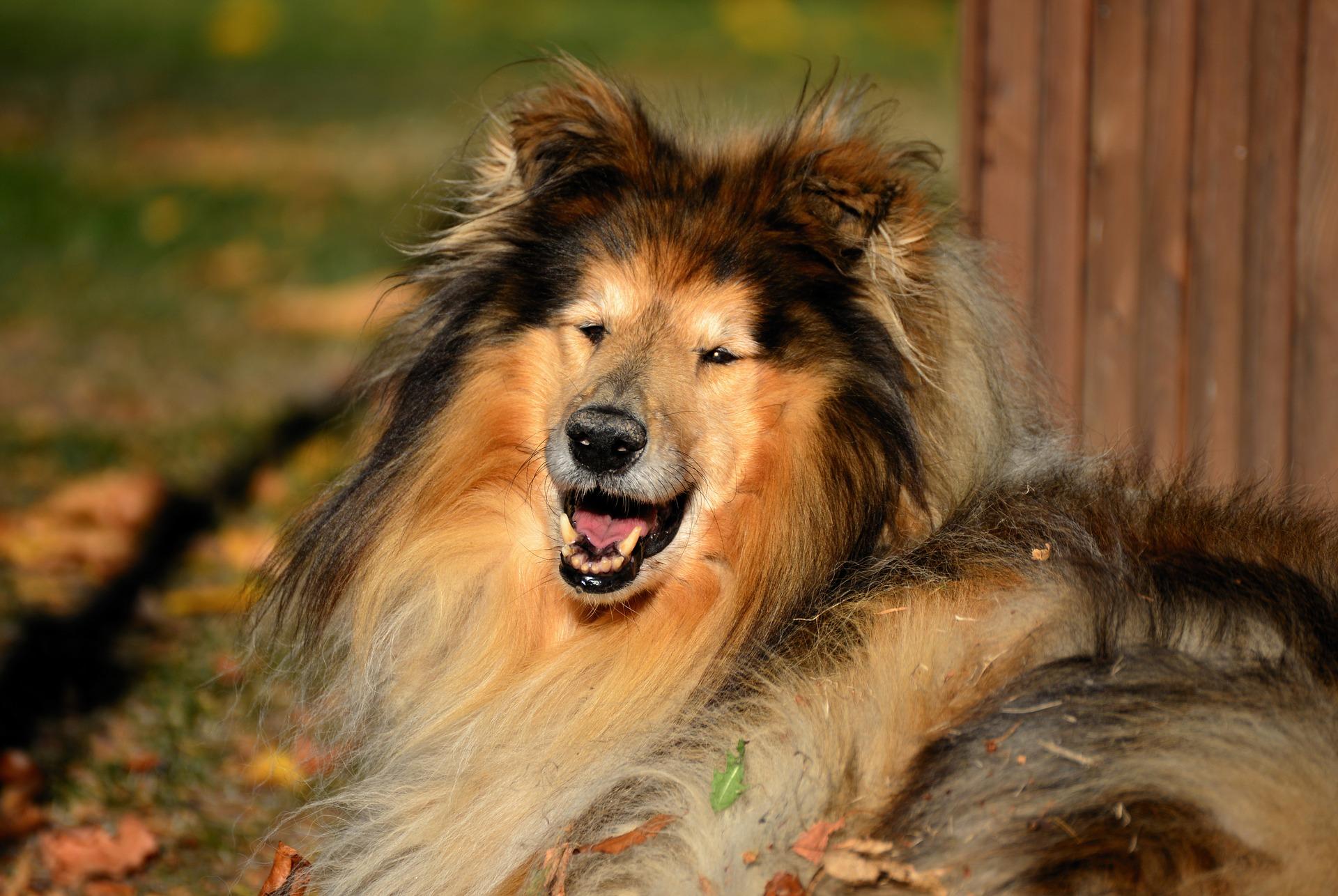Healthy Dog Fur
