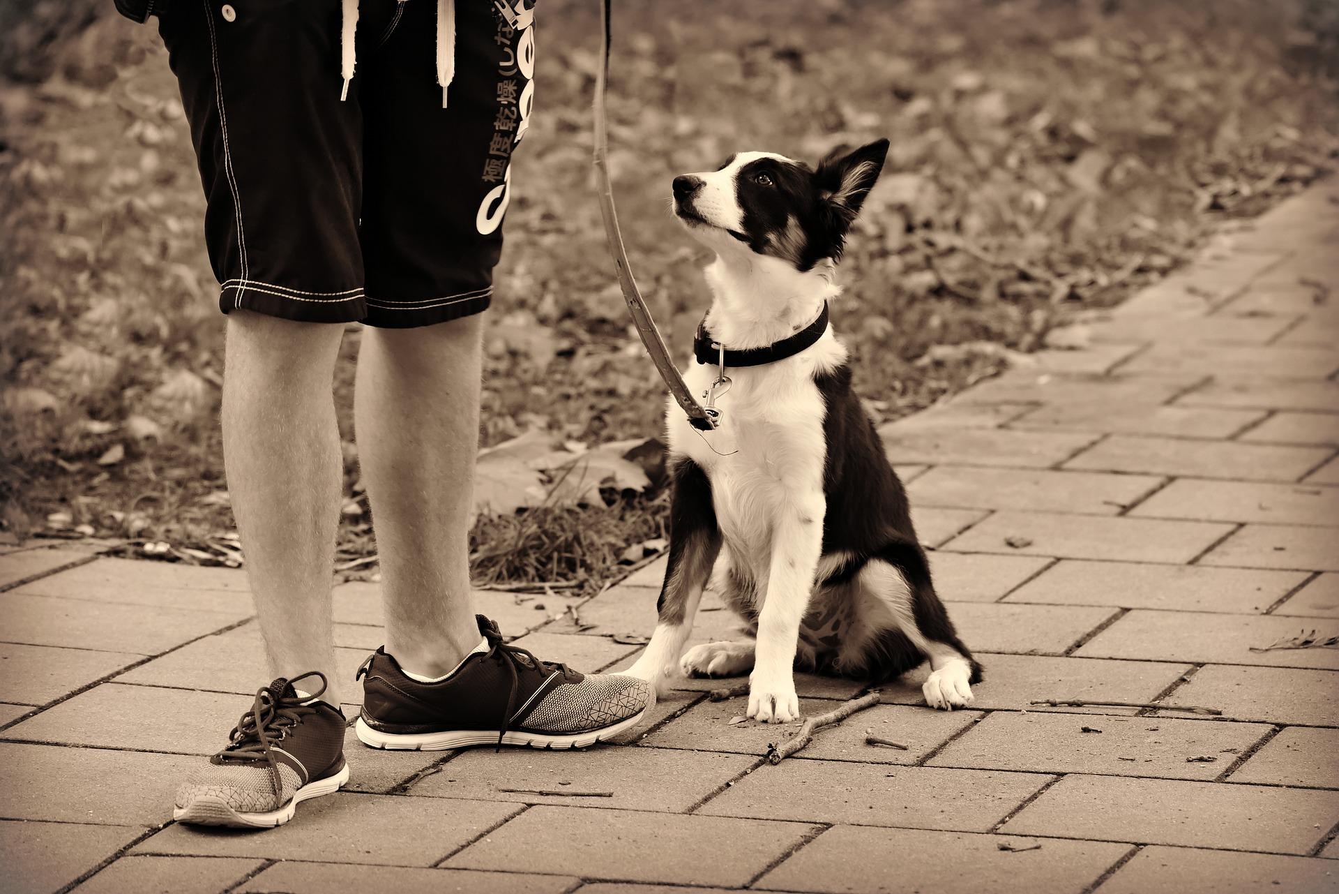 canine health