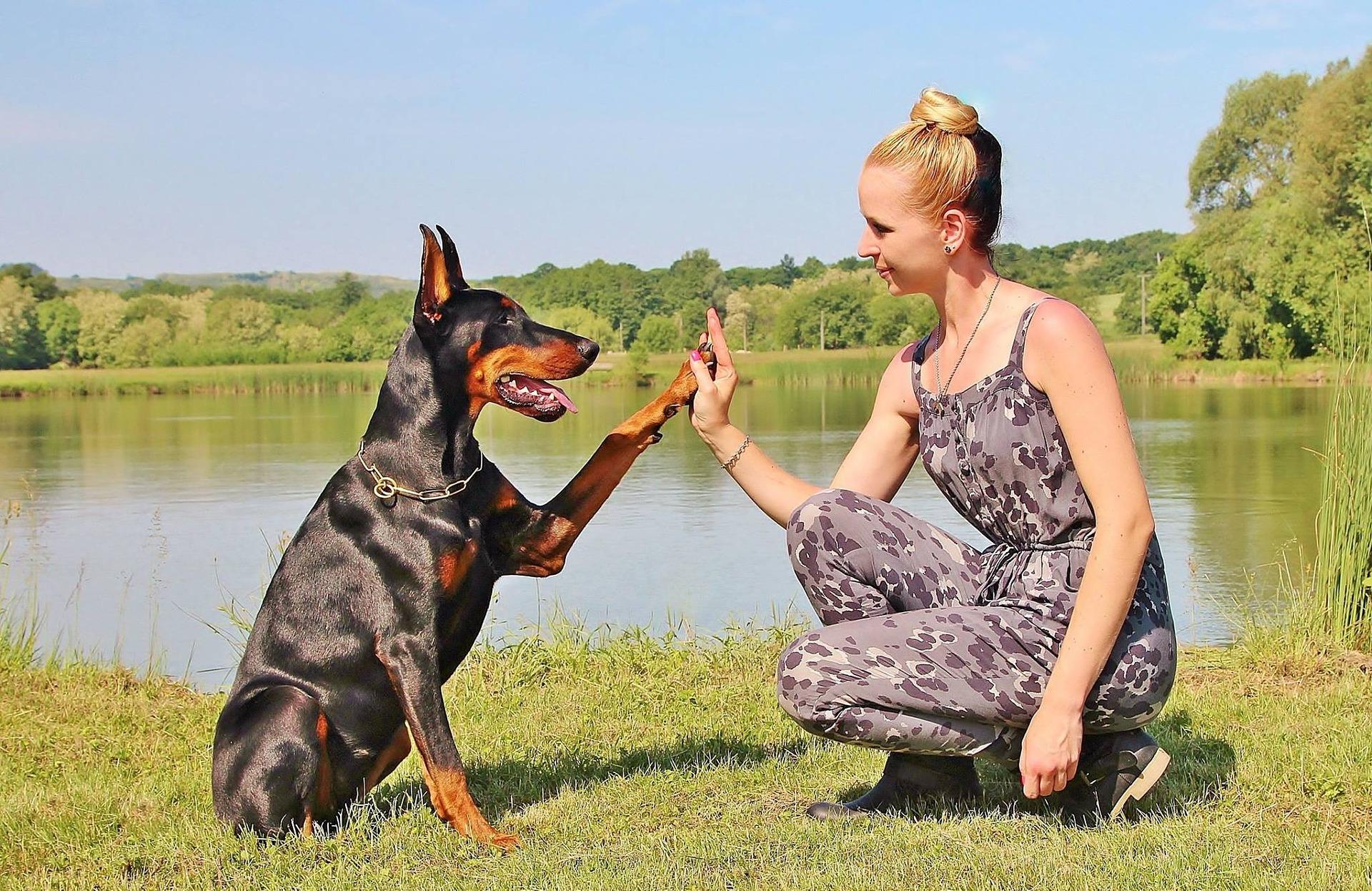 Dog Shake Paws