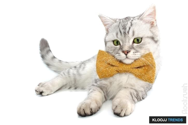 custom cat t shirt