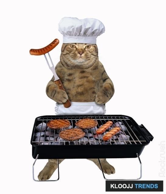 healthiest wet cat food