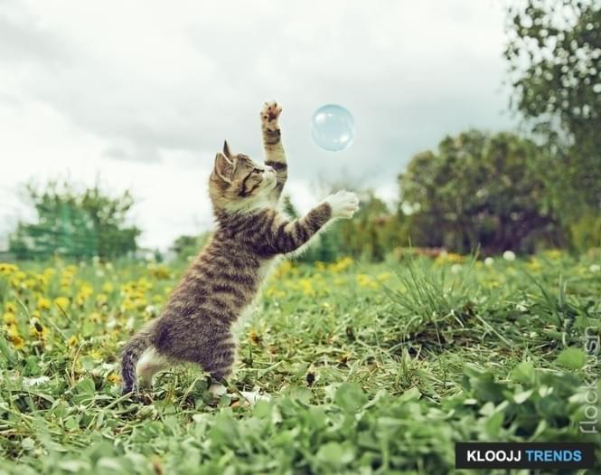 big cat rescue live cam