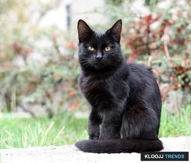 black female kittens for adoption