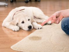dog training in your home