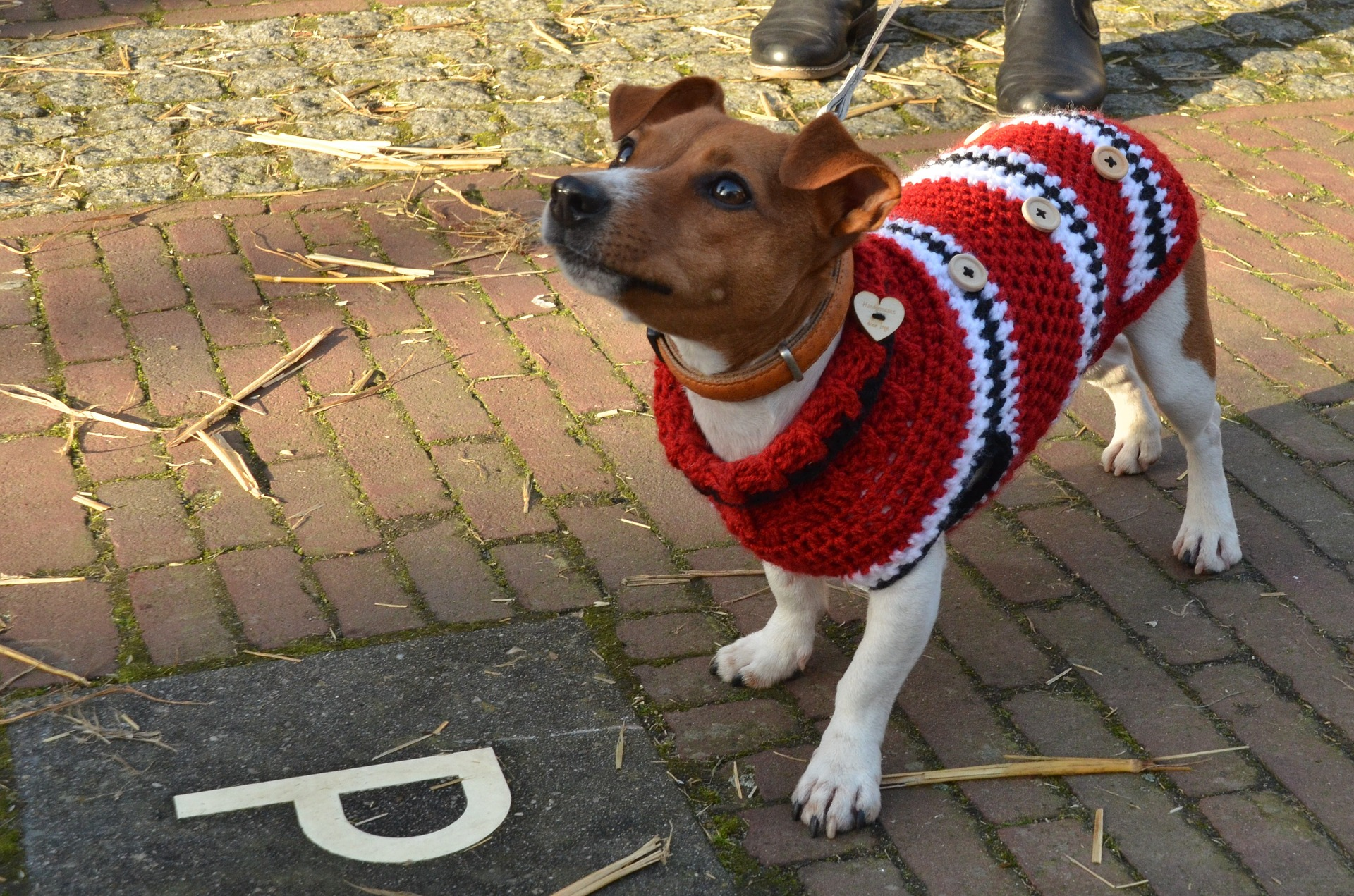 dogs need sweaters in winter