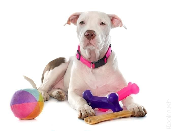 funniest dog toys