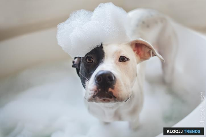 puppy bath soap