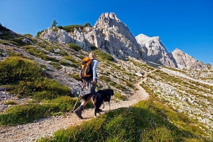 best dog for hiking protection