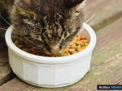best grain free cat food
