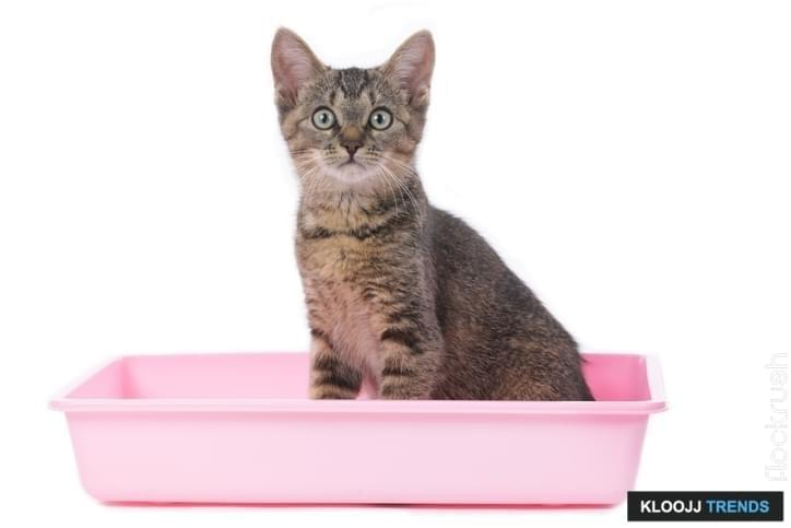 natural cat litter brands