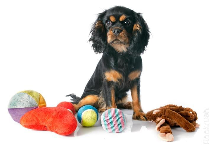 best dog teething toys