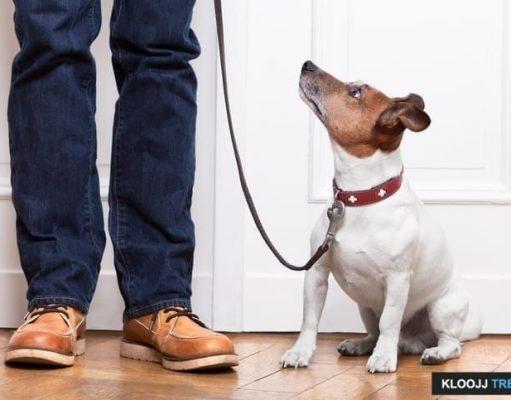 train dog to walk off leash