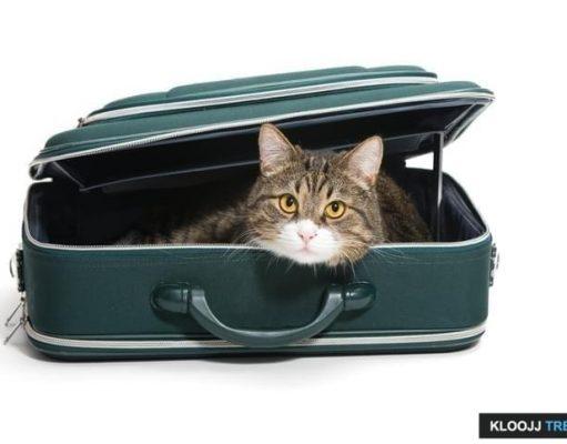 pet travel insurance