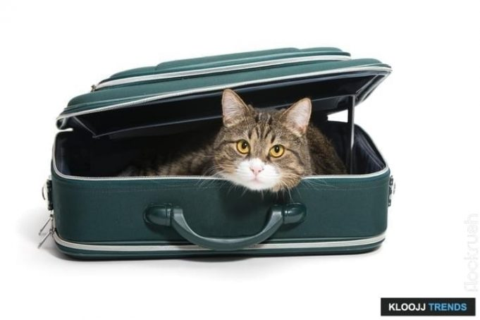 pet travel insurance