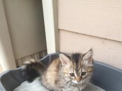 cat pooping outside litter box diarrhea