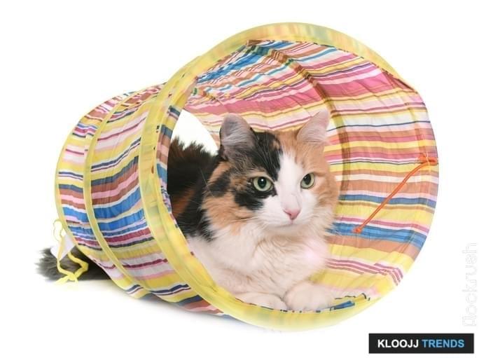 outdoor cat room