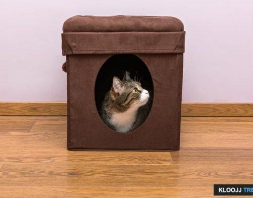 cathouse videos