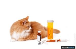 cat insulin injection