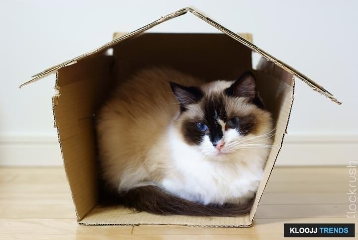 best cat climbing structures