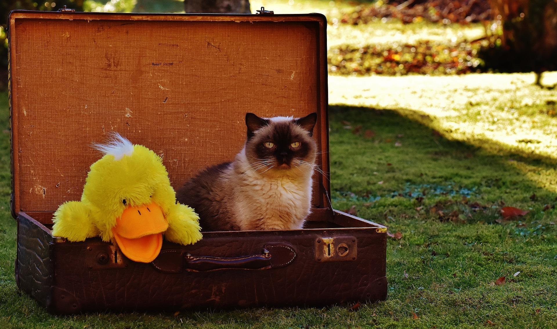 Cat Car Travel
