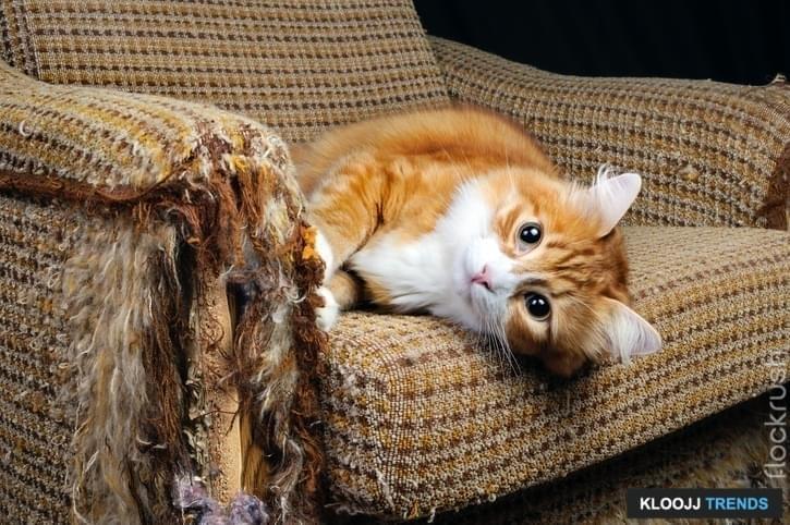 cat climbing house